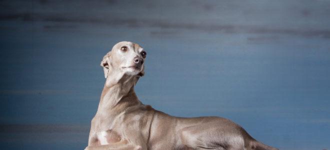 Le confinement vu par nos voisins : l'Alliance Canine Latine
