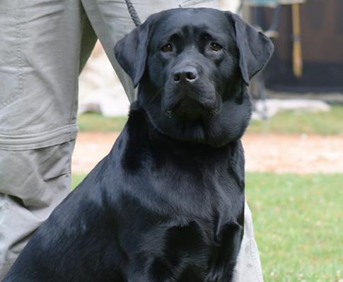 Royal Canin : le confinement ne nous aura jamais autant rapprochés !