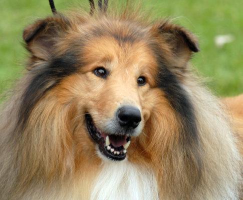 La Société Centrale Canine à votre écoute