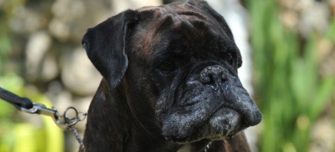 Longévité : enregistrer la date de décès de mon chien, pour quoi faire ?