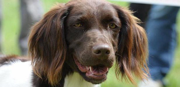 Où venir rencontrer la Centrale Canine en 2020 ?